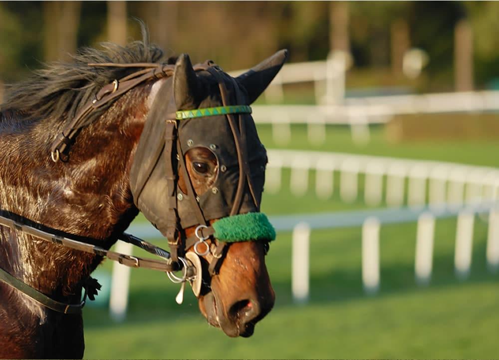 Cheltenham county hurdle betting calculator starting a sports betting company